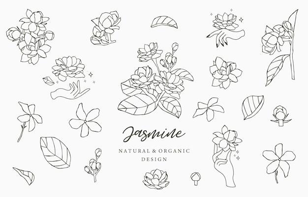 Coleção de logotipo preto jasmine com folhas.