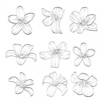 Coleção de mão desenhada de jasmim