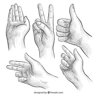 Coleção de mãos com poses diferentes em estilo realista