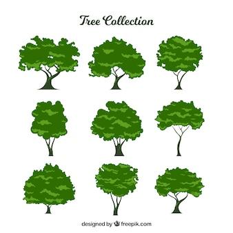 Coleção de nove árvores frondosas