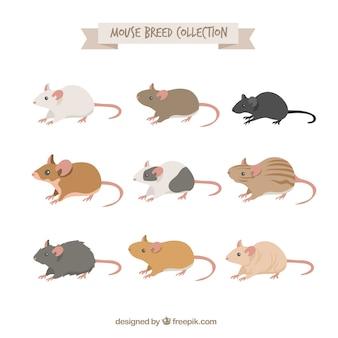 Coleção de nove de raças de ratos