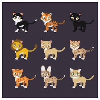 Coleção de nove espécies felinas