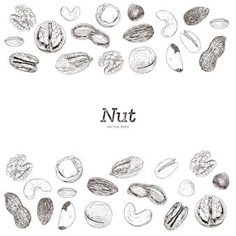 Coleção de nozes e sementes, mão desenhar croqui.