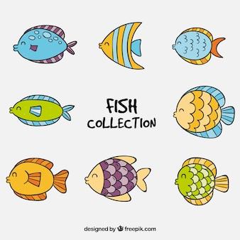 Coleção de oito peixes