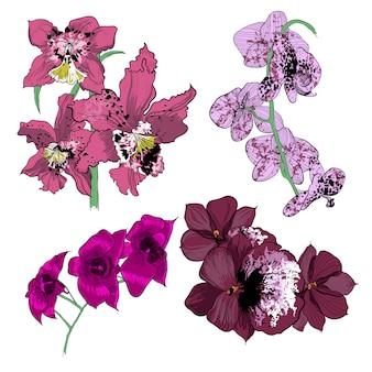 Coleção de orquídeas com desenho colorido
