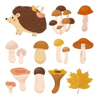 Coleção de outono aconchegante com ouriço e muitos quartos