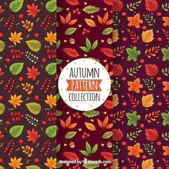 Coleção de padrão outono colorido com folhas