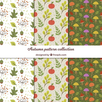 Coleção de padrões de outono com folhas planas