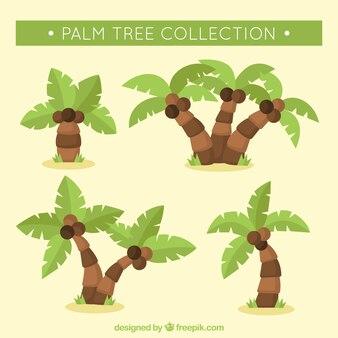Coleção de palmeiras e cocos