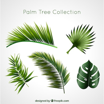 Coleção de palmeiras