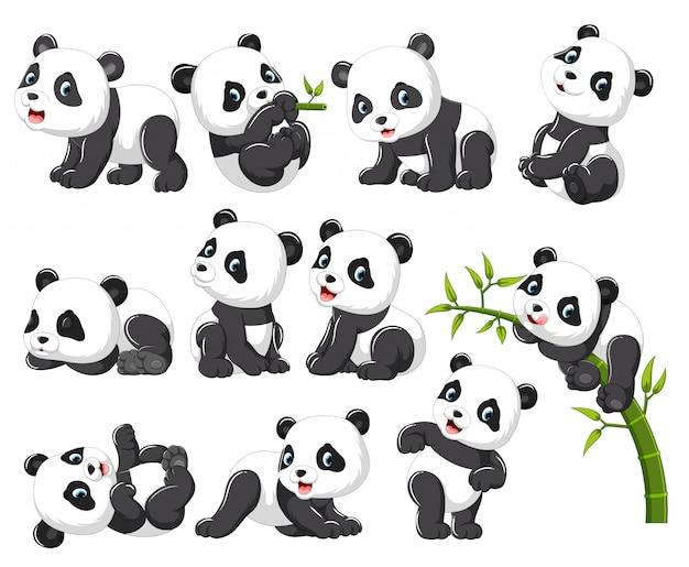 Coleção de panda feliz com vários posando