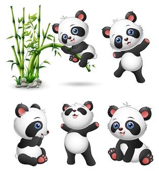 Coleção de pandas bebê fofo