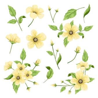 Coleção de parte de flores, elemento floral