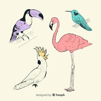 Coleção de pássaro exótico de mão desenhada