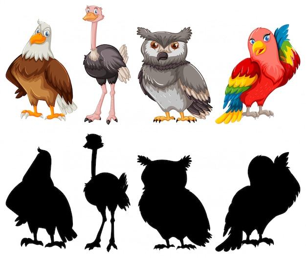 Coleção de pássaros de contorno de silhueta e cor