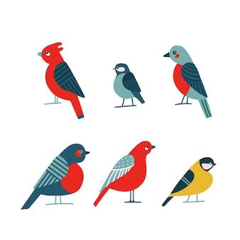 Coleção de pássaros de desenho animado