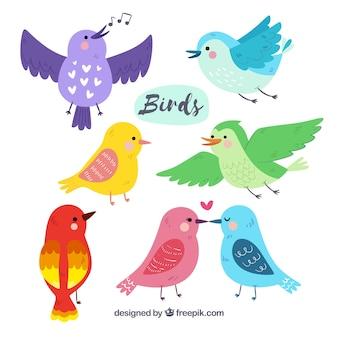 Coleção de pássaros desenhada a mão