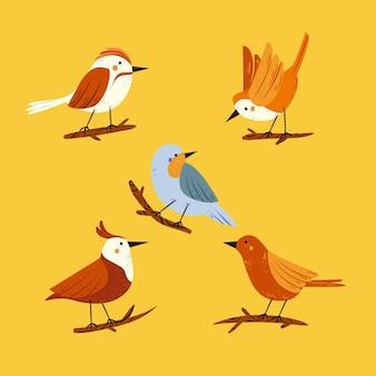 Coleção de pássaros desenhada