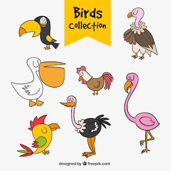 Coleção de pássaros desenhados à mão