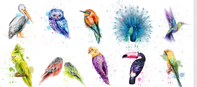 Coleção de pássaros em aquarela