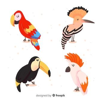 Coleção de pássaros exóticos aquarela