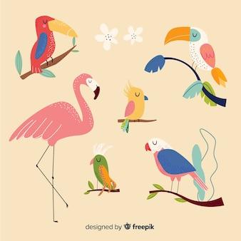 Coleção de pássaros exóticos de mão desenhada