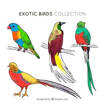 Coleção de pássaros exóticos desenhados a mão