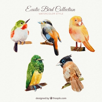 Coleção de pássaros exóticos em estilo aquarela