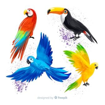 Coleção de pássaros exóticos estilo aquarela