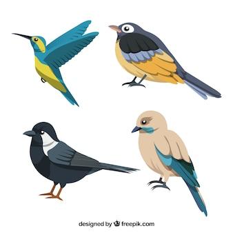 Coleção de pássaros planos