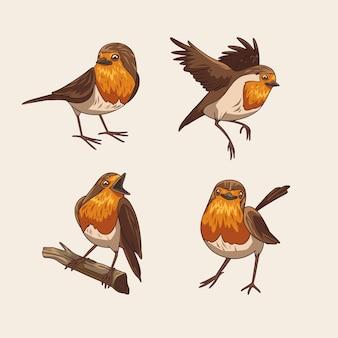 Coleção de pássaros robin desenhada à mão