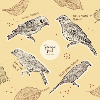 Coleção de pássaros tanager, mão desenhar croqui.