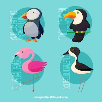 Coleção de pássaros tropicais bonitos