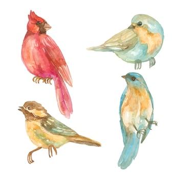Coleção de pássaros tropicais em aquarela