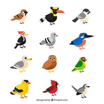 Coleção de pássaros tropicais