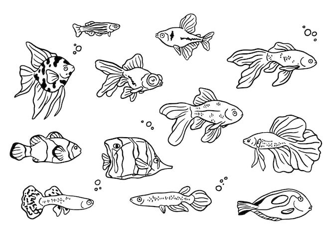 Coleção de peixes desenhados à mão