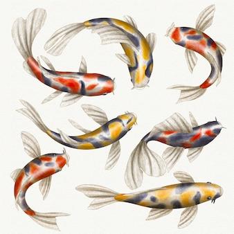 Coleção de peixes japoneses