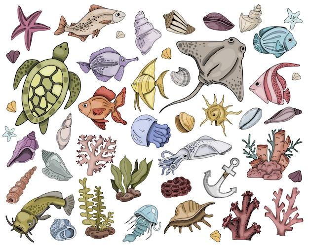 Coleção de peixes marinhos