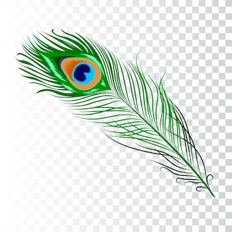 Coleção de penas de pavão