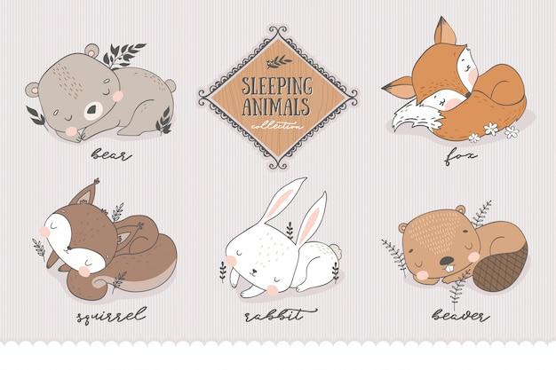 Coleção de personagens da floresta dos desenhos animados. animal adormecido