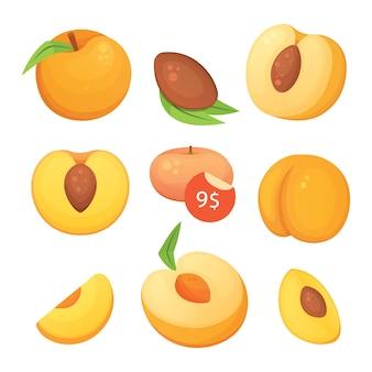 Coleção de pêssegos cortados e inteiros. ilustração em vetor damasco no estilo curtoon.