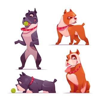 Coleção de pitbull adorável de desenho animado