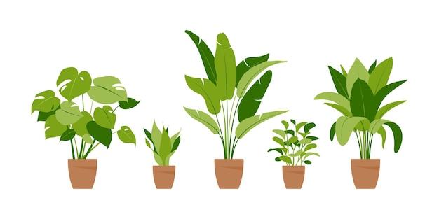 Coleção de plantas caseiras.