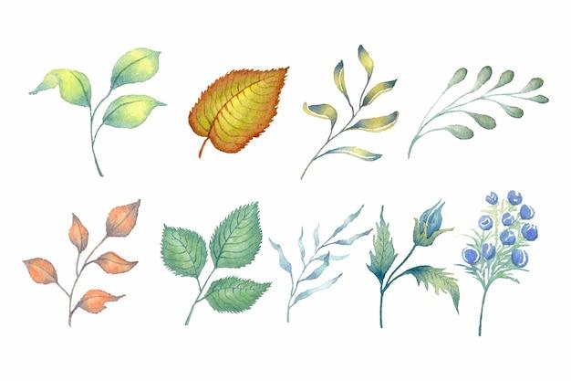 Coleção de plantas de folhas verdes em aquarela