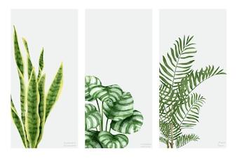Coleção de plantas de mão desenhada isolado no fundo branco