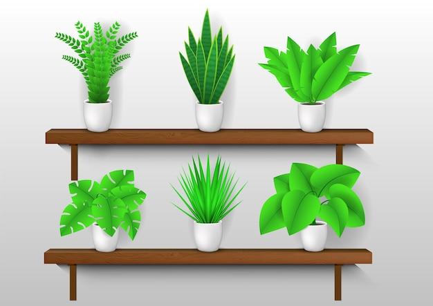 Coleção de plantas decorativas em vaso nas prateleiras.