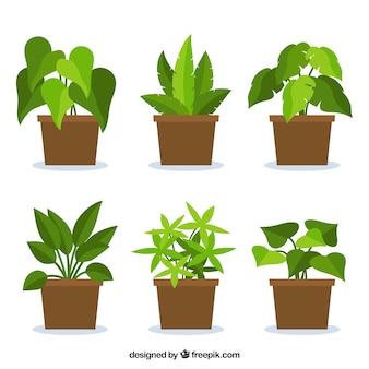 Coleção de plantas no design plano