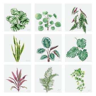 Coleção de plantas ornamentais desenhadas à mão
