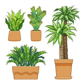 Coleção de plantas ornamentais em vasos