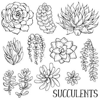 Coleção de plantas suculentas desenhadas à mão e isoladas em fundo branco